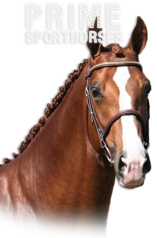 Prime Sporthorses